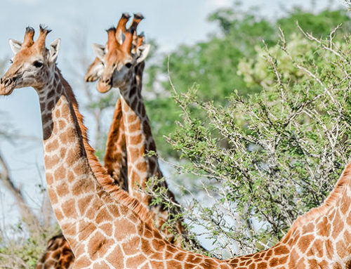 When is the best time to visit Moditlo and the Kruger National Park?