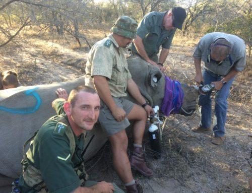 Our anti-poaching warriors hard at work